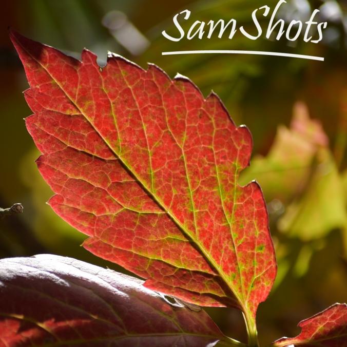 leaf-2-2